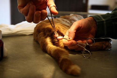 операции животным